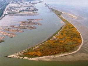 Jetty Island