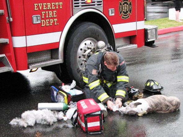 Firefighter reviving dogs