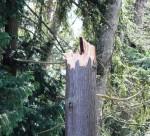 Tree snapped