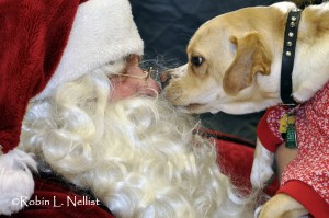Santa Paws nose to nose
