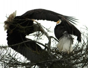 Eagles 7