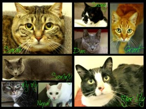 adoptable Everett cats