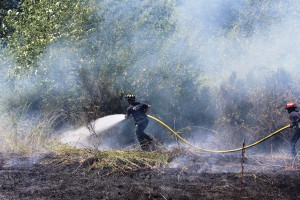 Everett grass fire